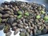 Collected pecan nuts